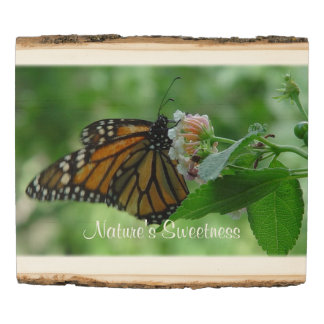 Monarch Butterfly Pink White Flower Wood Panel