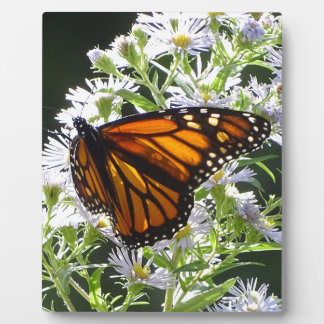 Monarch Butterfly Plaque