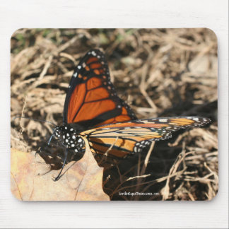 Monarch Butterfly Posing Nature Photo Mousepad