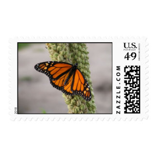 Monarch Butterfly - Postal Stamp