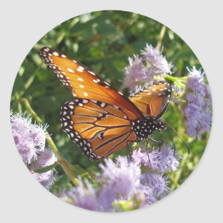 Monarch Butterfly Resting on a Flower Classic Round Sticker