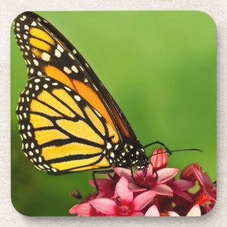Monarch Butterfly  Side View Vibrant Photograph Drink Coaster