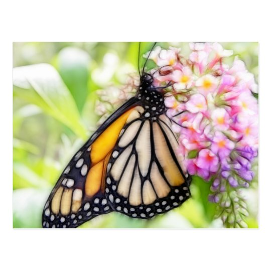 Monarch Butterfly Sipping Nectar Postcard
