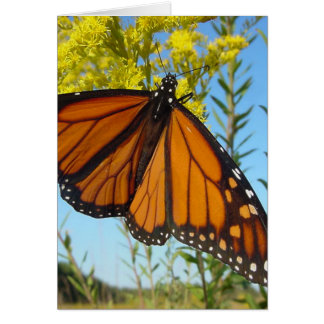 Monarch butterfly spreads his wings card