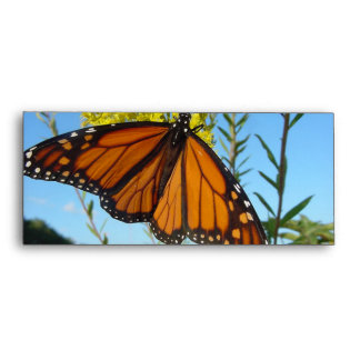 Monarch butterfly spreads his wings envelope