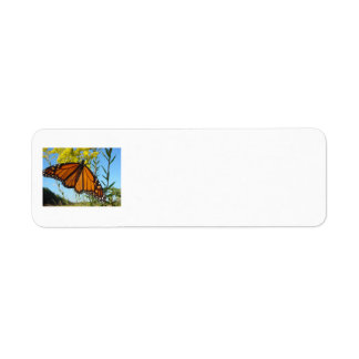 Monarch butterfly spreads his wings label