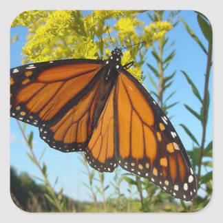 Monarch butterfly spreads his wings square sticker