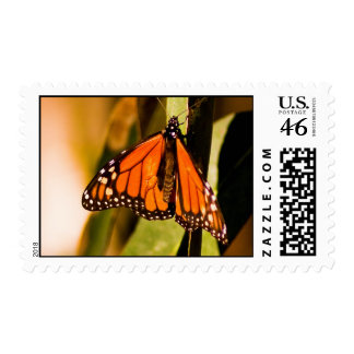 Monarch Butterfly Stamps