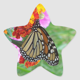 Monarch Butterfly Star Sticker