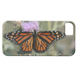Monarch Butterfly Thistle iPhone 5/5S  Case iPhone 5 Covers