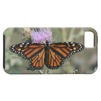 Monarch Butterfly Thistle iPhone 5/5S Case
