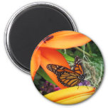 Monarch Butterfly Throne Refrigerator Magnet