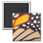 Monarch Butterfly Wing Magnet