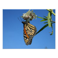 Monarch Butterfly With Blue Sky - Poster