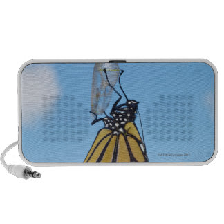 Monarch Butterfly, with Chrysalis Mp3 Speakers