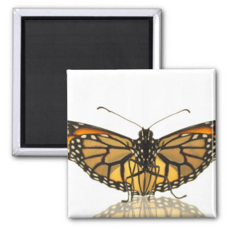 Monarch butterfly with wings spread 2 inch square magnet