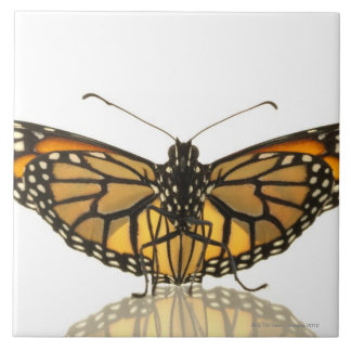 Monarch butterfly with wings spread ceramic tile