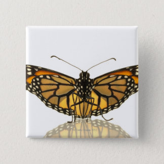Monarch butterfly with wings spread pinback button
