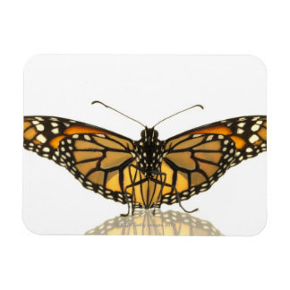 Monarch butterfly with wings spread rectangular photo magnet