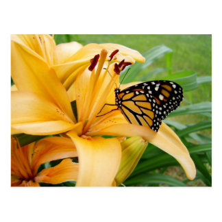 Monarch Butterfly Yellow Lily Flower Photo Postcard