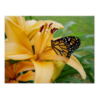 Monarch Butterfly Yellow Lily Flower Photo Poster