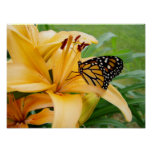 Monarch Butterfly Yellow Lily Flower Photo Posters