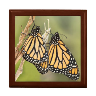 Monarch Butterflys Gift Box
