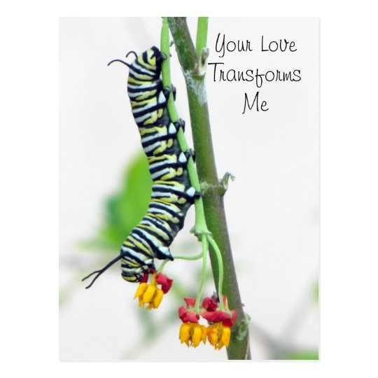 Monarch Caterpillar Valentine Postcard