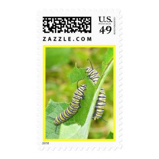 Monarch caterpillars postage