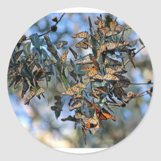 Monarch Cluster Classic Round Sticker