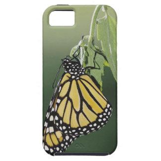 Monarch, Danaus plexippus, adult newly emerged iPhone SE/5/5s Case