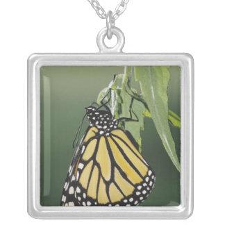 Monarch, Danaus plexippus, adult newly emerged Square Pendant Necklace