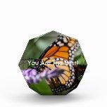 Monarch Danaus Plexippus Award