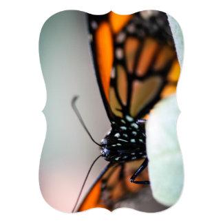 Monarch Danaus Plexippus Card