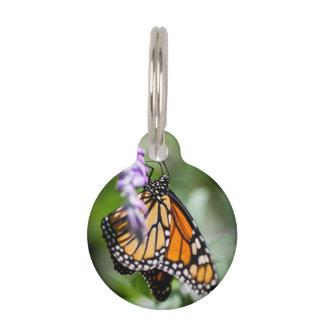 Monarch Danaus Plexippus Pet Tags