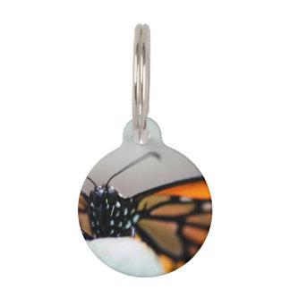 Monarch Danaus Plexippus Pet ID Tags