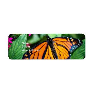 Monarch Danaus Plexippus Custom Return Address Labels