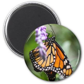 Monarch Danaus Plexippus 2 Inch Round Magnet
