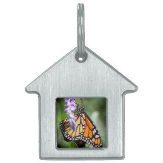 Monarch Danaus Plexippus Pet Tag