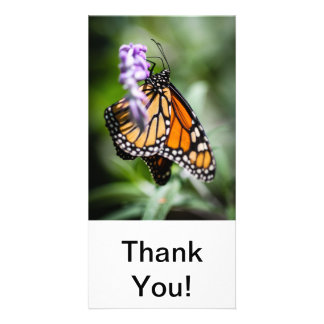 Monarch Danaus Plexippus Photo Card