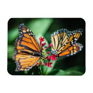 Monarch Danaus Plexippus Rectangular Photo Magnet
