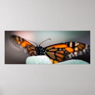 Monarch Danaus Plexippus Print