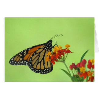 Monarch in Green Greeting Card