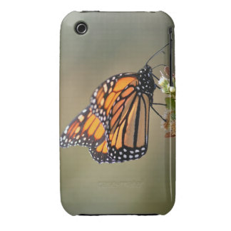 Monarch, iphone 3 Case-Mate iPhone 3 Cover