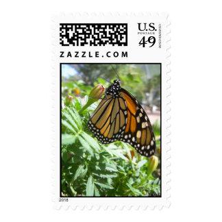 Monarch Majesty (8) Postage Stamps