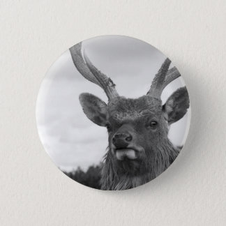 Monarch of the Glen Pinback Button