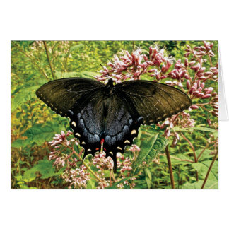 Monarch of the Mountain Greeting Card