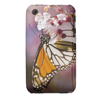 Monarch on a Flower Case-Mate iPhone 3 Case