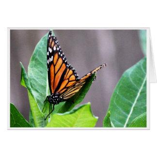 Monarch on a Milkweed Card