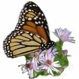 Monarch on Asters Photo Sculpture